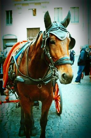 cavallino-roma1