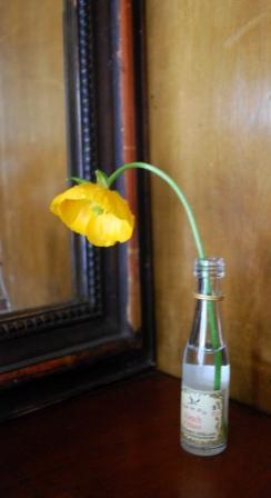 persian-buttercup